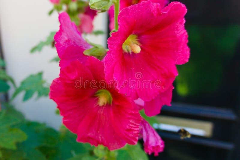 Flores coloridas que florescem no sol do verão fotografia de stock