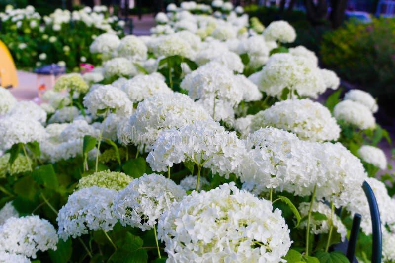 Flores coloridas que florescem no sol do verão imagens de stock