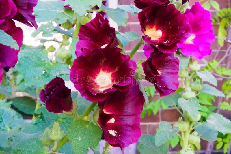 Flores coloridas que florescem no sol do verão fotos de stock