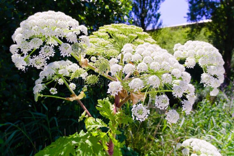 Flores coloridas que florescem no verão fotografia de stock royalty free