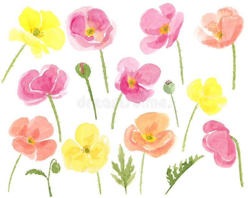 Flores coloridas tiradas mão das papoilas da aquarela ajustadas no branco ilustração stock