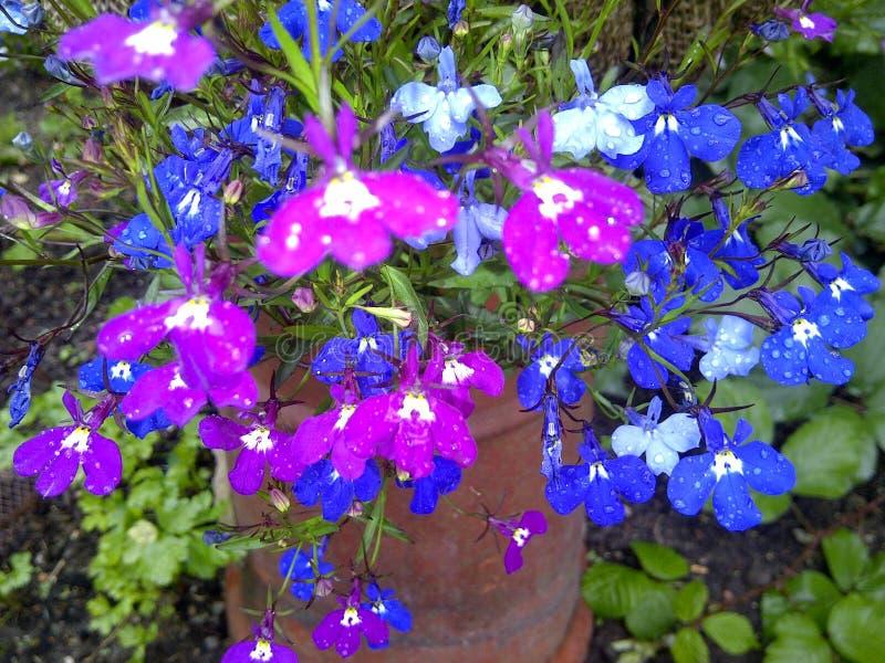 Flores coloridas vívidas imagem de stock