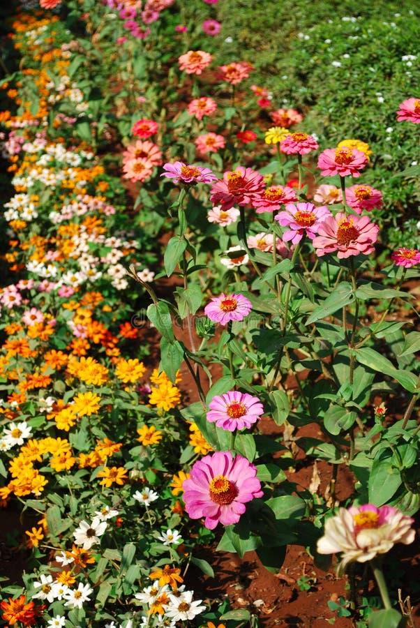 Flores coloridas vibrantes foto de archivo