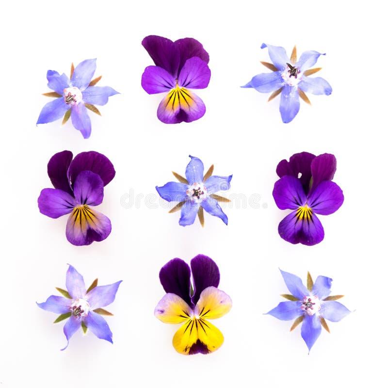 Flores comestibles púrpuras y azules imagenes de archivo