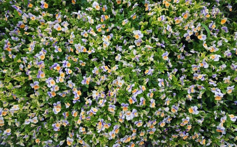 Flores como um fundo imagens de stock royalty free