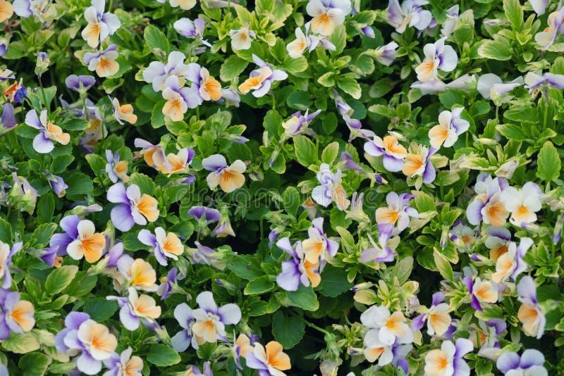 Flores como um fundo imagem de stock royalty free