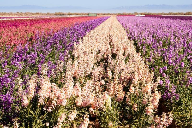 Flores comunes foto de archivo