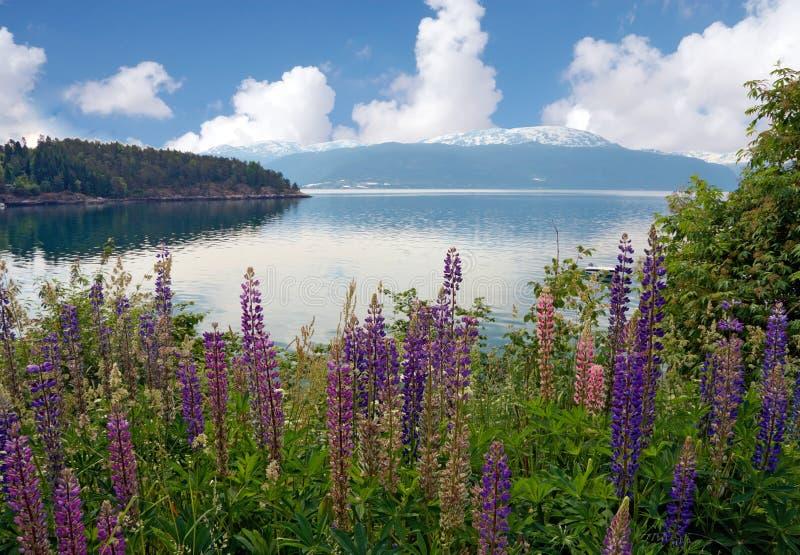 Flores con el fondo del lago y de las montañas foto de archivo