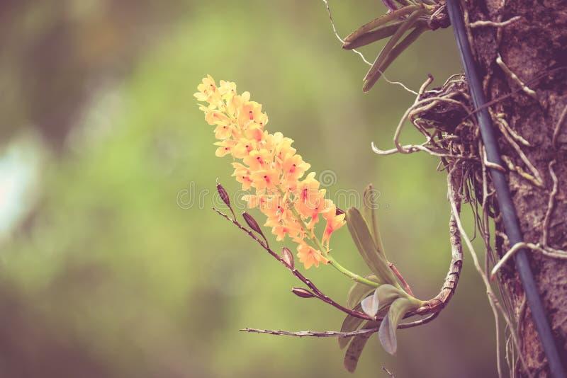 Flores con el vintage retro del efecto del filtro imagenes de archivo