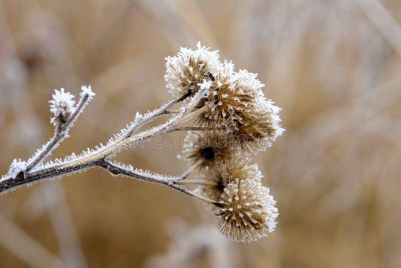 Flores congeladas imagens de stock