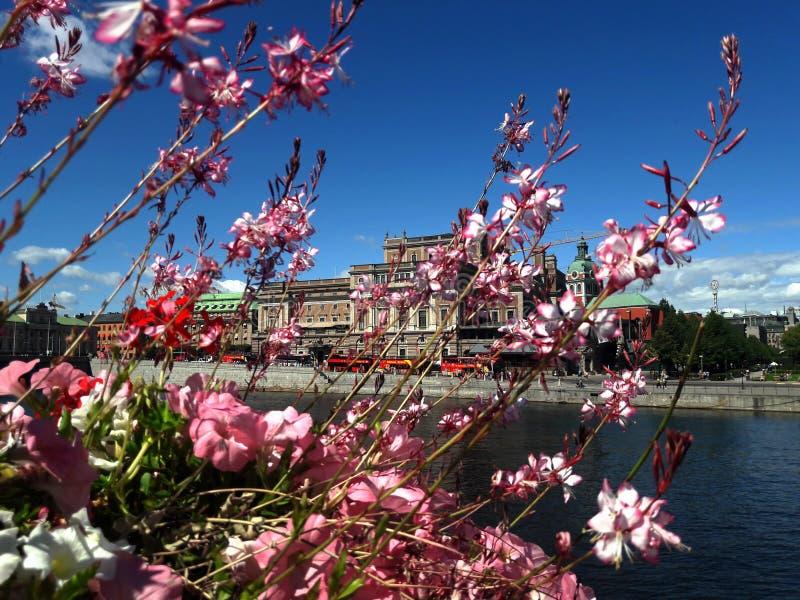 Flores contra el lago y la ciudad, fondo de Estocolmo imágenes de archivo libres de regalías