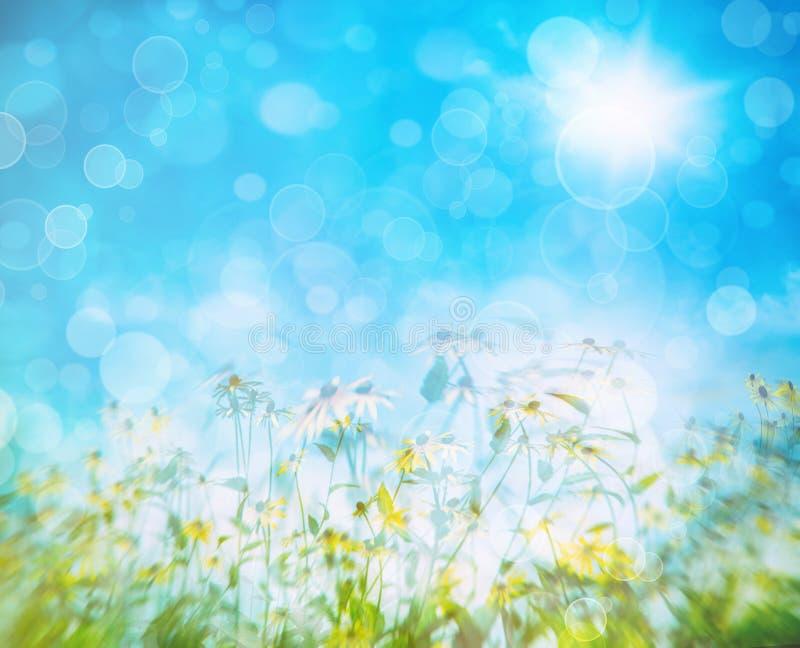 Flores contra un cielo azul fotos de archivo libres de regalías