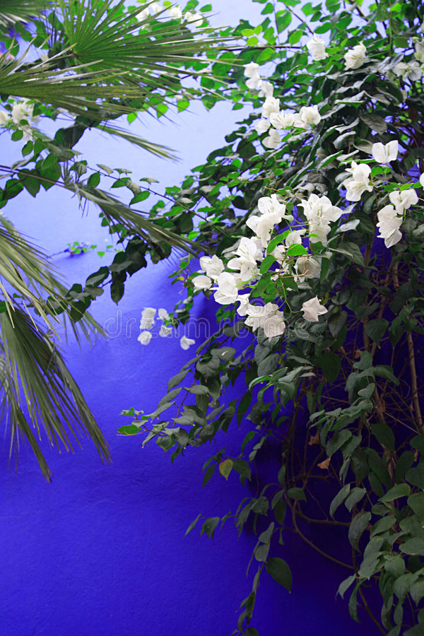Flores contra una pared azul foto de archivo libre de regalías