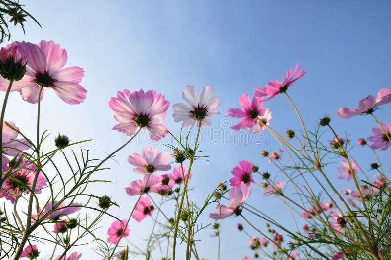 Download Flores cor-de-rosa foto de stock. Imagem de planta, paisagem - 12804232