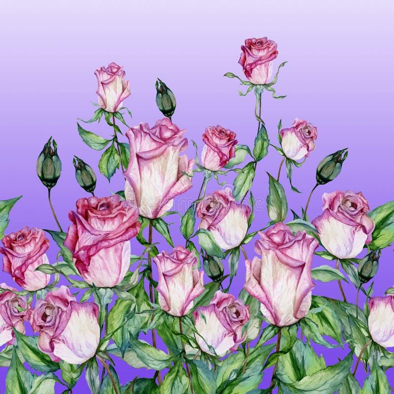 Flores cor-de-rosa bonitas com as folhas verdes no fundo roxo Teste padrão floral sem emenda, beira Pintura da aguarela Pintado à ilustração do vetor