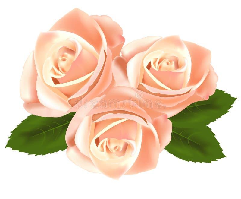 Flores cor-de-rosa bonitas com folhas. ilustração do vetor