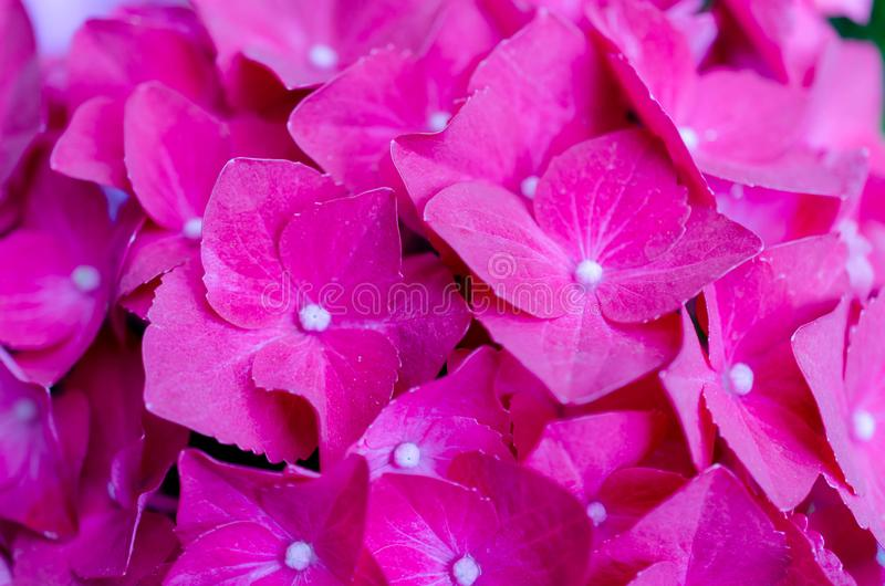 Flores cor-de-rosa bonitas, fundo floral imagens de stock royalty free