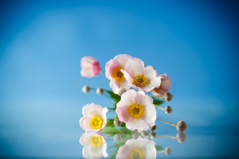 Flores cor-de-rosa bonitos em um fundo azul imagens de stock