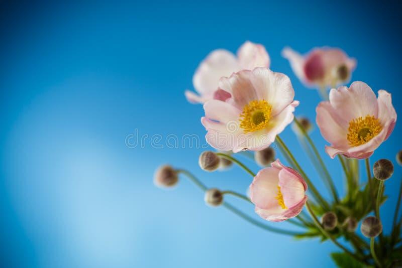 Flores cor-de-rosa bonitos em um fundo azul imagem de stock royalty free