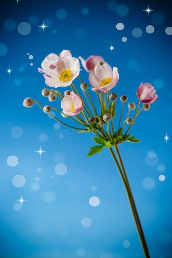 Flores cor-de-rosa bonitos em um fundo azul imagem de stock