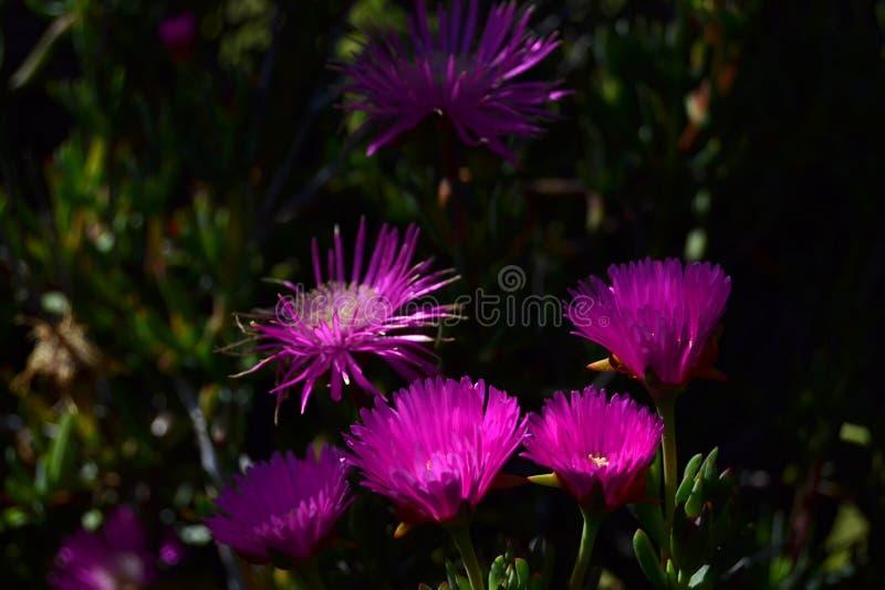 Flores cor-de-rosa brilhantes na noite foto de stock