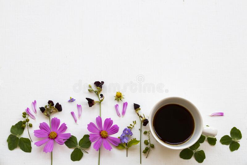 Flores cor-de-rosa cosmos com café quente espressor arranjo calmo estilo postcard imagem de stock