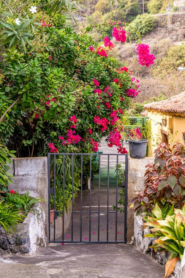 Flores cor-de-rosa da buganvília na porta espanhola fotografia de stock royalty free