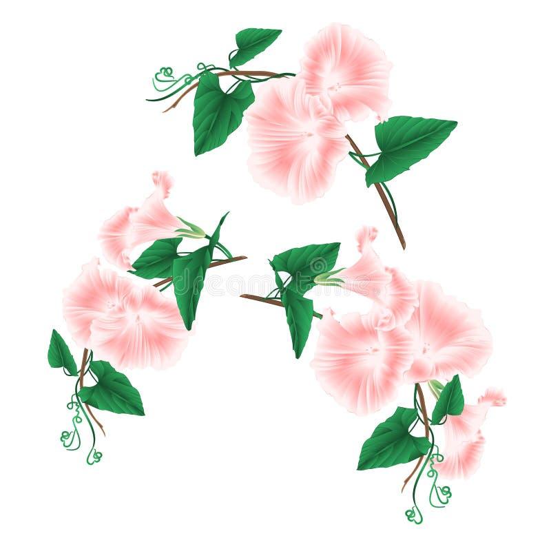 Flores cor-de-rosa da mola da corriola ajustadas em uma ilustração branca do vetor do vintage do fundo editáveis ilustração do vetor