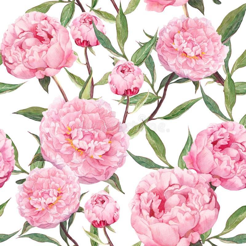 Flores cor-de-rosa da peônia Teste padrão sem emenda floral watercolor ilustração royalty free