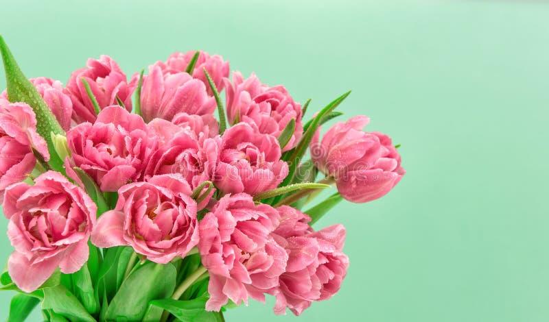 Flores cor-de-rosa da tulipa com gotas da água A mola floresce ramalhete imagens de stock royalty free