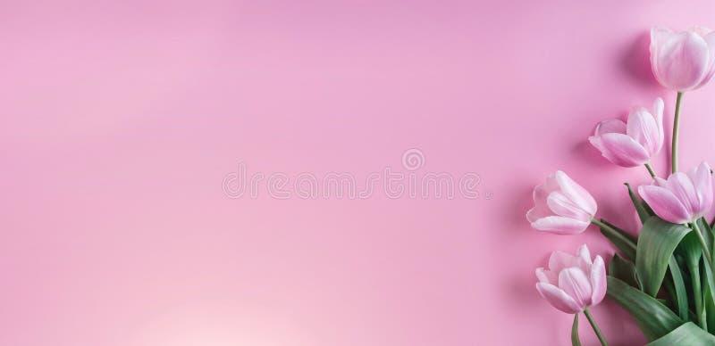 Flores cor-de-rosa das tulipas no fundo cor-de-rosa Cartão para o dia de mães, o 8 de março, Páscoa feliz Mola de espera ano novo foto de stock
