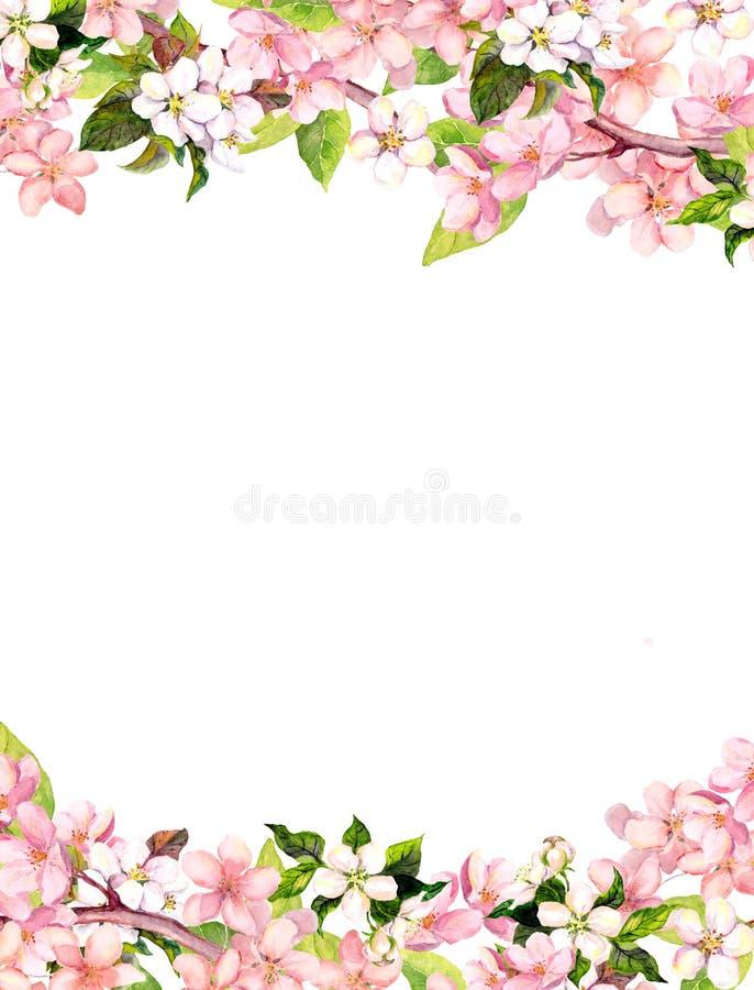 Flores cor-de-rosa de sakura da flor Cartão floral ou placa watercolor ilustração do vetor