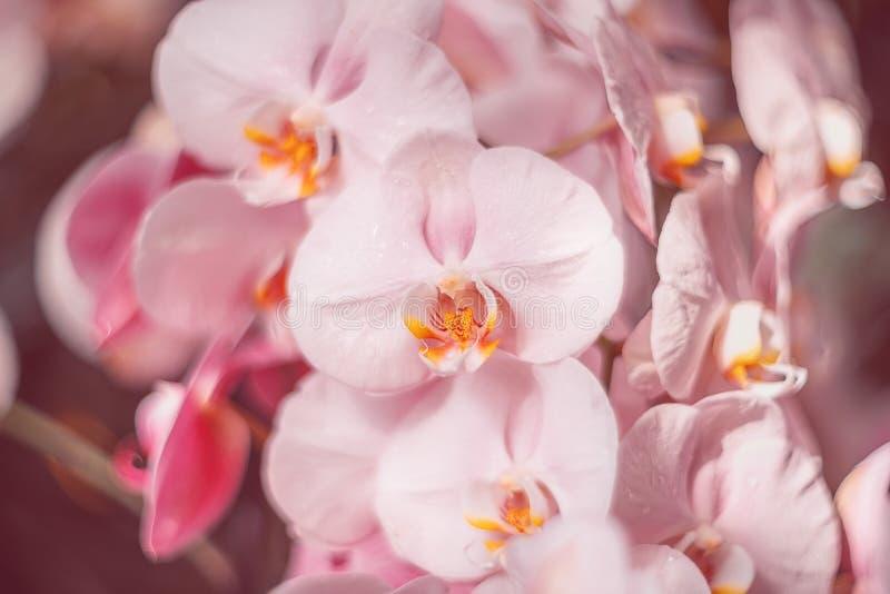 Flores cor-de-rosa delicadas Orqu?deas no jardim imagens de stock royalty free
