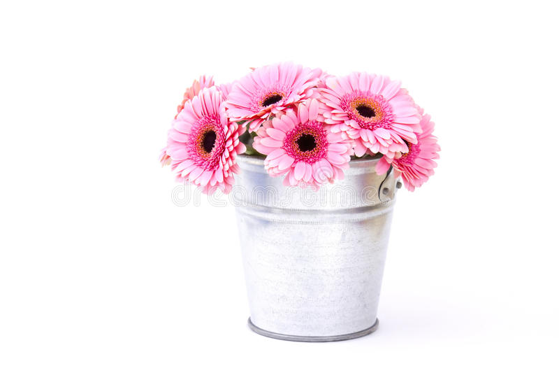 Flores cor-de-rosa do gerbera em uma cubeta fotografia de stock
