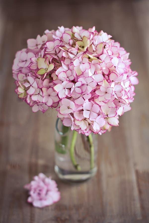 Flores cor-de-rosa do Hydrangea foto de stock royalty free