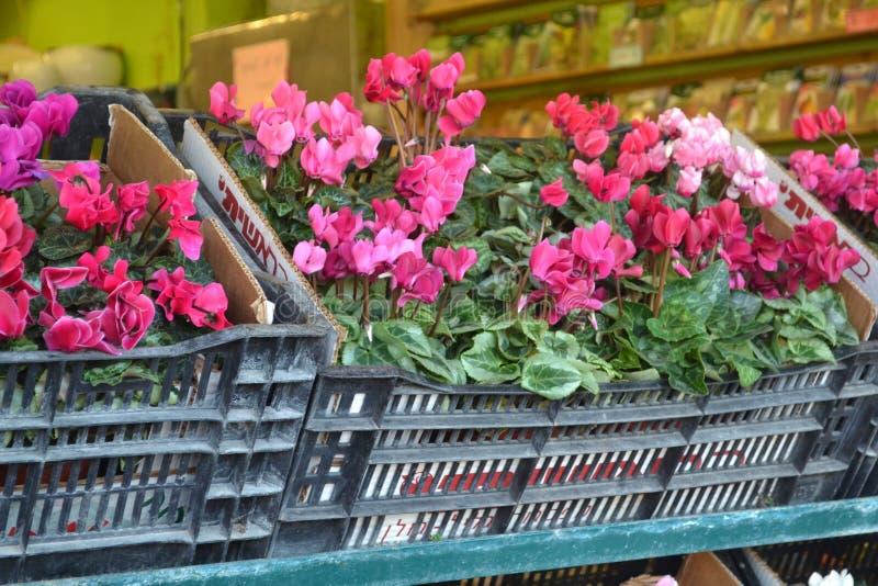 Flores cor-de-rosa do mercado foto de stock royalty free