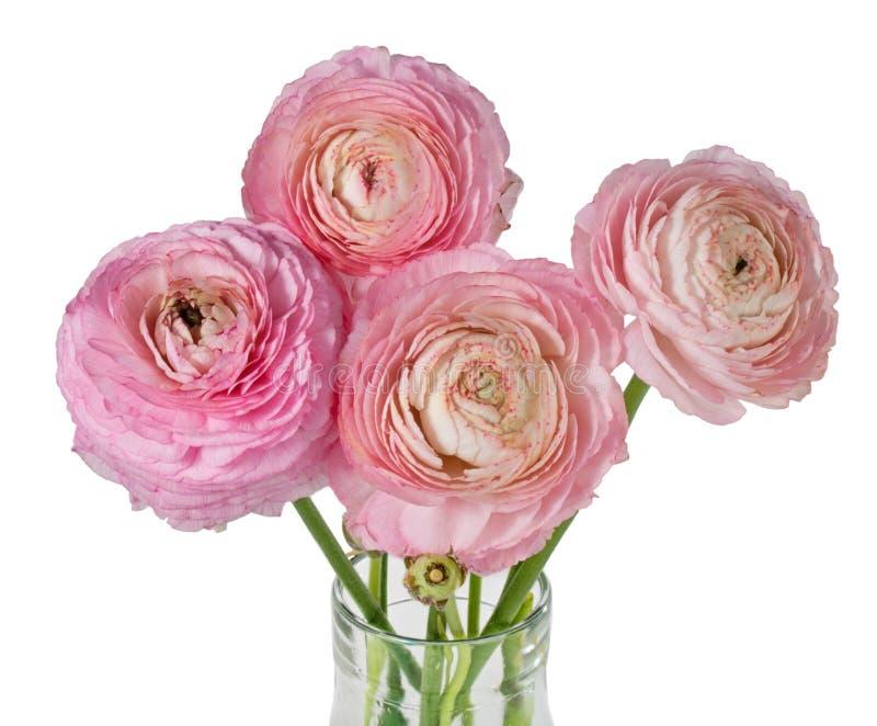 Flores cor-de-rosa do ranúnculo foto de stock