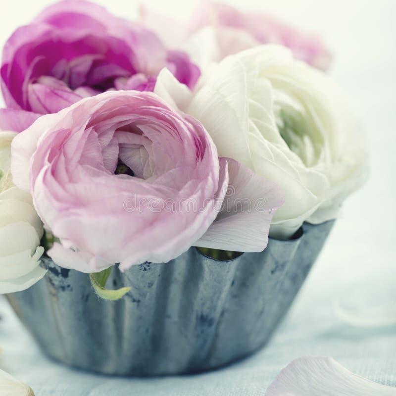 Flores cor-de-rosa do ranúnculo imagens de stock royalty free