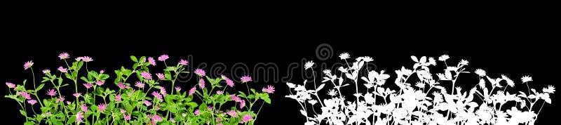 Flores cor-de-rosa do trevo isoladas com m?scara alfa imagens de stock royalty free