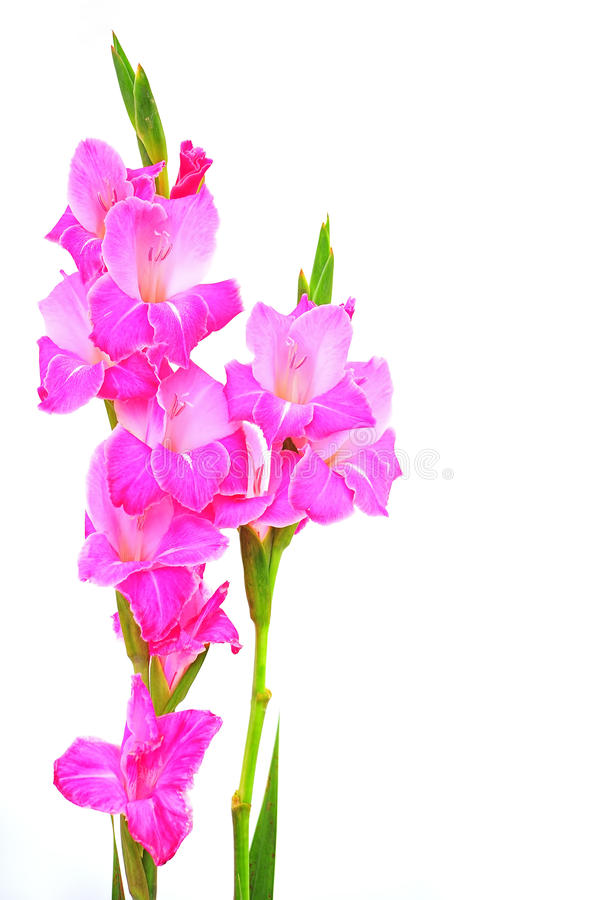 Download Flores cor-de-rosa imagem de stock. Imagem de folhas - 29848833