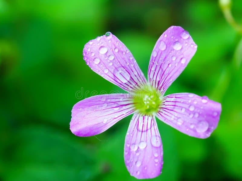 Flores cor-de-rosa em um fundo da natureza foto de stock royalty free