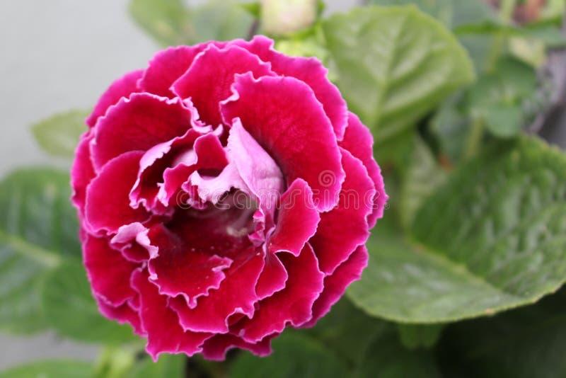 Flores cor-de-rosa em uma natureza imagens de stock royalty free