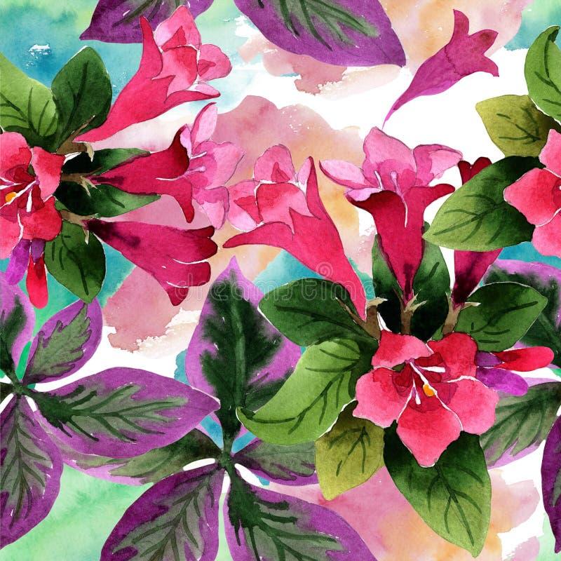 Flores cor-de-rosa de florida do weigela da aquarela Flor botânica floral Teste padrão sem emenda do fundo ilustração royalty free