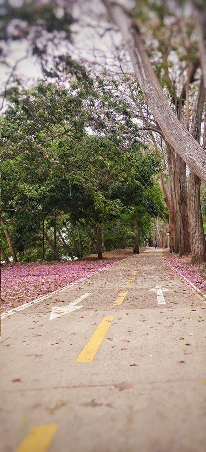 Flores cor-de-rosa na rota da bicicleta fotos de stock royalty free