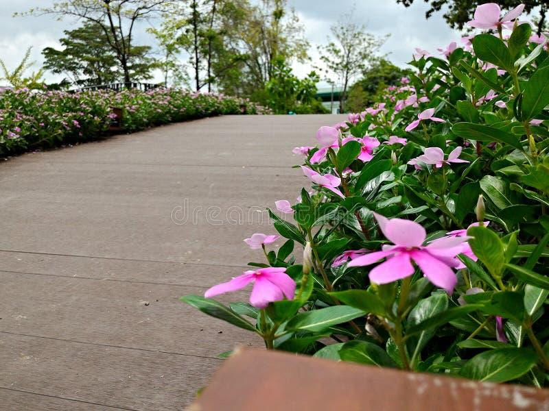 Flores cor-de-rosa no lado a ponte fotos de stock
