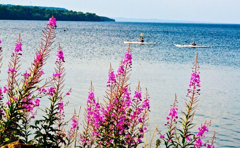 Flores cor-de-rosa pelo lago no verão fotografia de stock royalty free