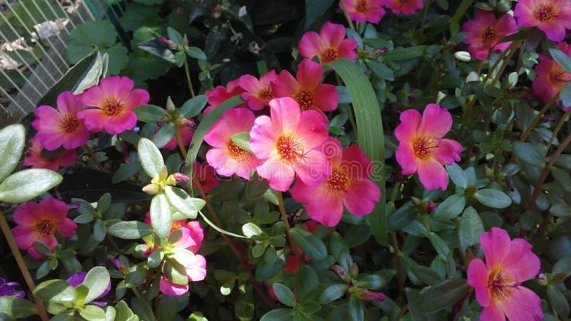 Flores cor-de-rosa pequenas imagens de stock