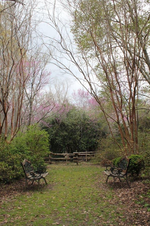 Flores cor-de-rosa que florescem em árvores verdes no pátio do quintal da plantação do sul fotografia de stock royalty free