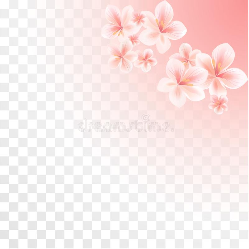 Flores cor-de-rosa de Sakura isoladas no fundo transparente do inclinação Flores da maçã Cherry Blossoms Vetor ilustração royalty free