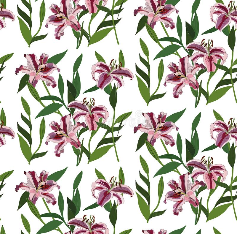 Flores cor-de-rosa vermelhas florais ervais dos lírios do verão brilhante bonito maravilhoso da mola com vetor verde das folhas ilustração do vetor